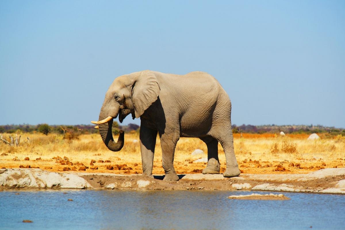 Tại điểm đến Botswana, bạn sẽ không thể bỏ qua 2 vườn quốc gia là Vườn Quốc gia Chobe và Okavango Delta với những chú voi, sư tử, hươu cao cổ, trâu và ngựa vằn. Theo: Skratch World