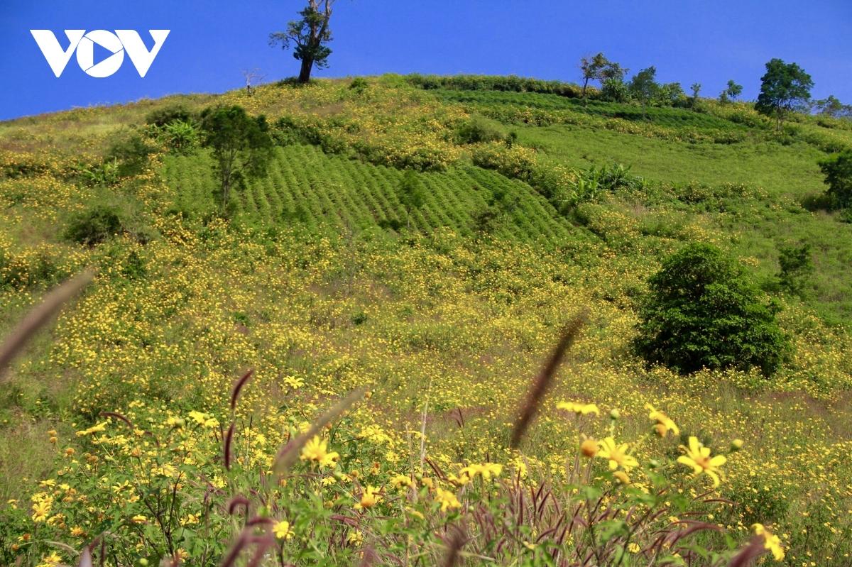 Núi lửa Chư Dang Ya ở làng Ia Gri, xã Chư Đăng Ya, huyện Chư Păh, cách trung tâm phố núi Gia Lai khoảng 30 km về hướng đông bắc. Núi lửa đã dừng hoạt động cả triệu năm, dấu tích nham thạch đã để lại cho người dân vùng đất màu mỡ phù hợp để trồng dong giềng, ngô, khoai, bí đỏ…