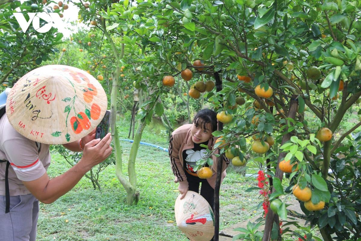 Trải nghiệm vườn quýt hồng Lai Vung và làng hoa Sa Đéc