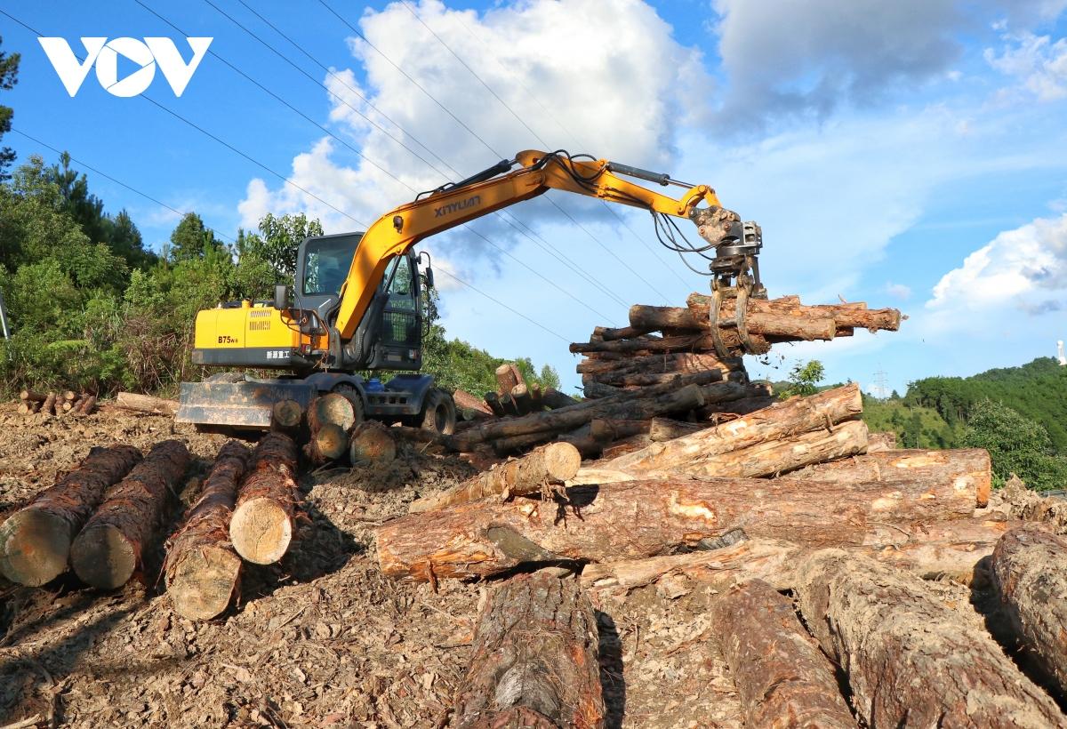 Điểm tập kết, sơ chế gỗ nằm cách UBND xã Toả Tình chỉ khoảng 100m.