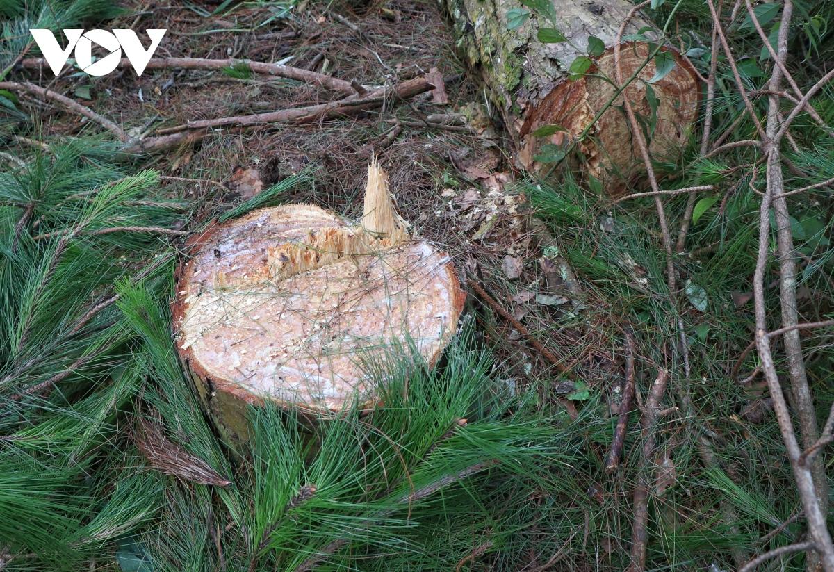 UBND tỉnh Điện Biên yêu cầu làm rõ trách nhiệm của tập thể, cá nhân do để xảy ra phá rừng.