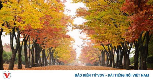 10 địa điểm nên ghé thăm khi đến thành phố Ulsan, Hàn Quốc | VOV.VN