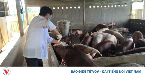 Tăng trưởng giá trị chăn nuôi theo giai đoạn, hướng tới đạt 5-6,5 triệu tấn thịt/năm | VOV.VN