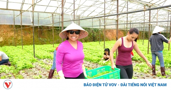 Vì sao Đà Lạt – Lâm Đồng tạm dừng phát triển du lịch canh nông? | VOV.VN