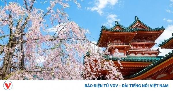 10 địa điểm ngắm hoa nổi tiếng ở Nhật Bản nhất định phải ghé thăm | VOV.VN - mega 645
