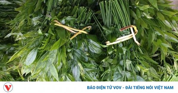 Giá 200.000 đồng/kg, rau lạ trên rừng vẫn được nhiều người Hà Nội tìm mua   VOV.VN