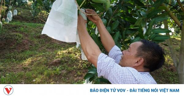 Bí quyết giúp nông dân Sơn La bán trái cây giá cao hơn gấp 2-3 lần | VOV.VN
