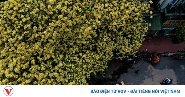 Ngỡ ngàng vẻ đẹp cây hoa bún có tuổi 300 năm giữa lòng Hà Nội | VOV.VN