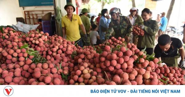 Không để nông sản tại vùng dịch ùn ứ | VOV.VN